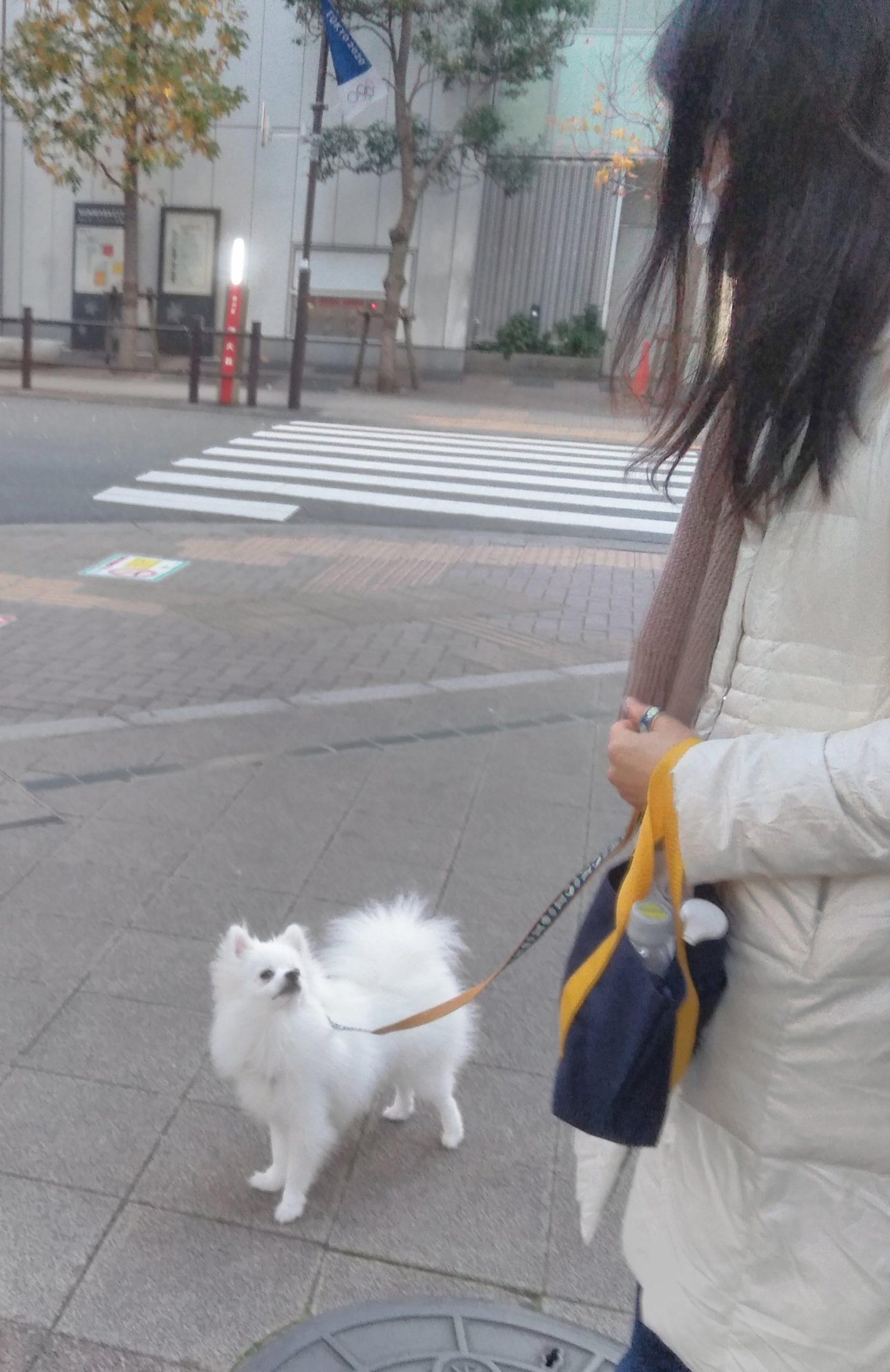 お散歩中もママのこと見てるね
