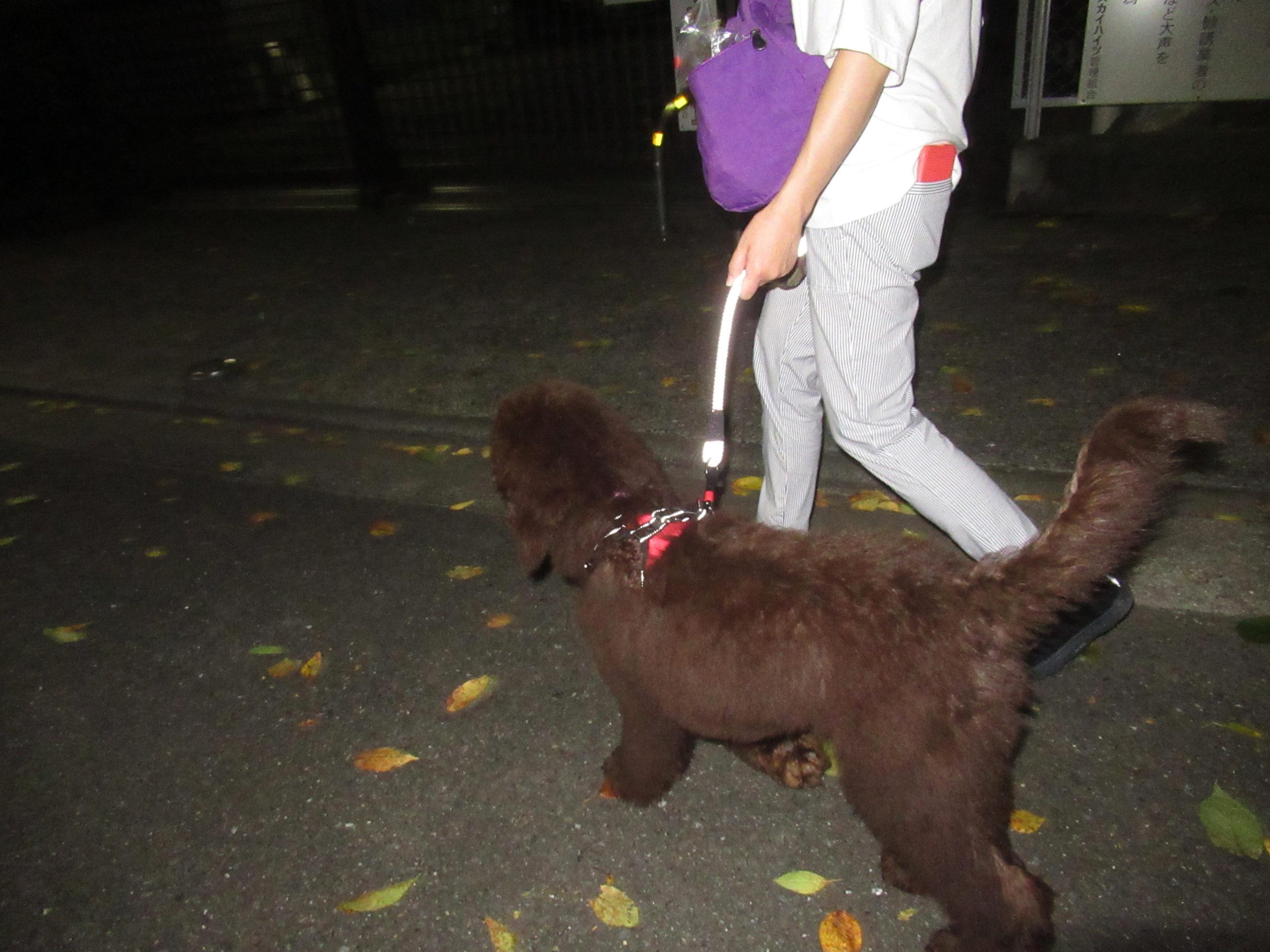 アヴィちゃんはお散歩上手!